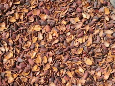 Скорлупа кедрового ореха, 60л