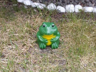 Лягушка зеленая